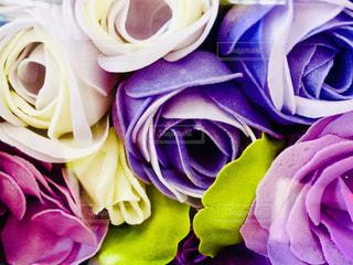 布地の薔薇の写真・画像素材[1716071]