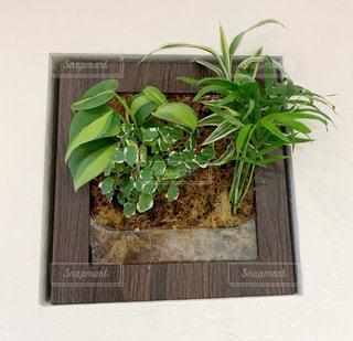 壁掛け植物の写真・画像素材[1727935]