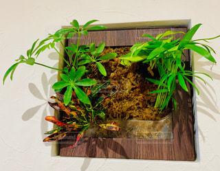 壁掛け植物の写真・画像素材[1727999]