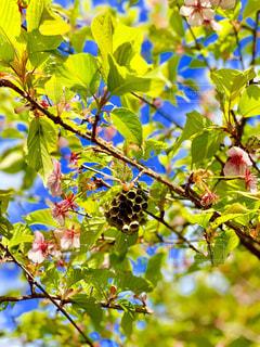 蜂の巣の写真・画像素材[1859237]