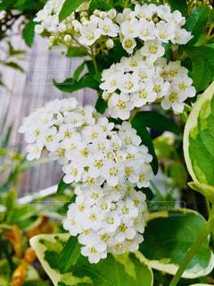小さな花の集合の写真・画像素材[2042940]