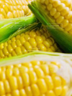 新鮮なトウモロコシの写真・画像素材[2241001]