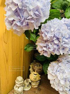 紫陽花の写真・画像素材[2254164]