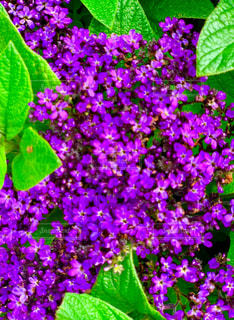 紫の小花の写真・画像素材[2263344]