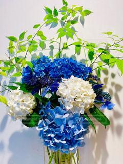 ブルーの紫陽花の写真・画像素材[2281572]