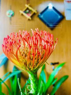 カラフルな花の写真・画像素材[2318030]
