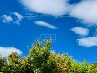 青空の写真・画像素材[2357280]