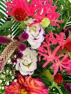 花をクローズアップの写真・画像素材[2712026]