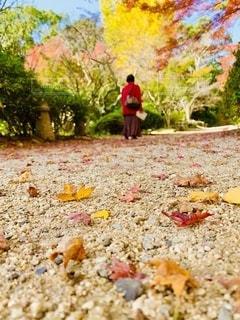 落ち葉を踏みながらの写真・画像素材[2737701]