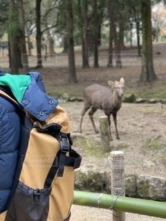 奈良公園の鹿の写真・画像素材[2788687]