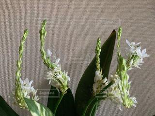玄関の花の写真・画像素材[2836576]