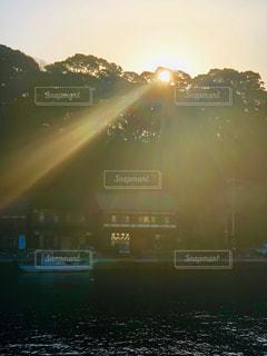 木の間から差し込む光の写真・画像素材[2979359]