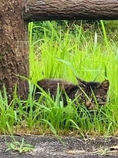 草に隠れて何見てる?の写真・画像素材[3467234]
