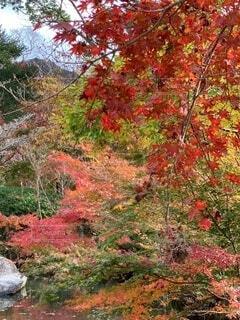 秋色の写真・画像素材[3892107]