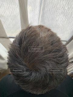 白髪の男性の写真・画像素材[4466497]