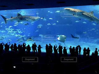 バック グラウンドで沖縄美ら海水族館と水の中の魚の群れの写真・画像素材[1188354]