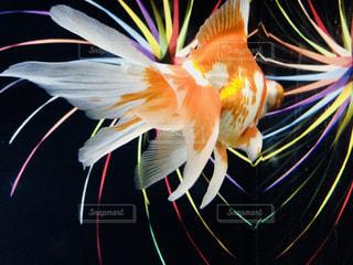 カラフルな魚の写真・画像素材[1188358]