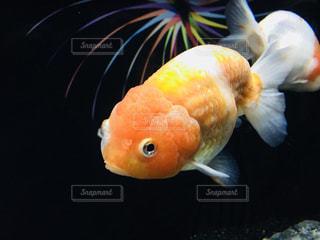 近くに魚のアップの写真・画像素材[1188359]