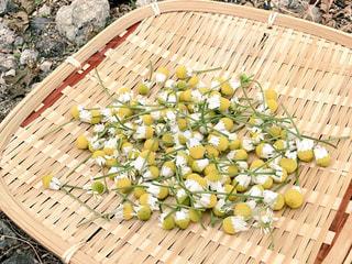 カモミール、収穫の写真・画像素材[1211584]