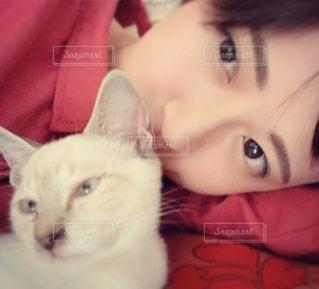 横たわってカメラを見ている猫、女性の写真・画像素材[2784688]