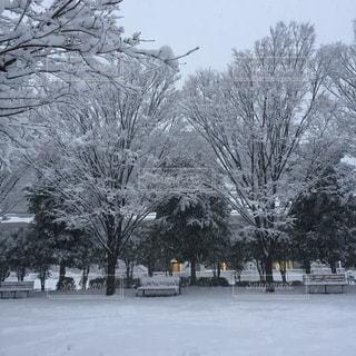 雪に覆われた木の写真・画像素材[1171433]