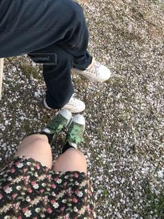 桜の絨毯の写真・画像素材[1171556]