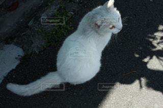 猫の写真・画像素材[1171246]