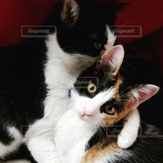 猫の写真・画像素材[1171321]