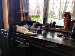 猫の写真・画像素材[1171449]
