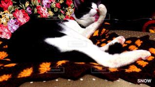 猫の写真・画像素材[1172590]