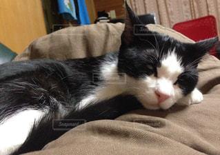 猫の写真・画像素材[1172695]