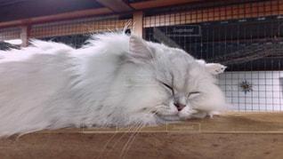 猫の写真・画像素材[1172721]