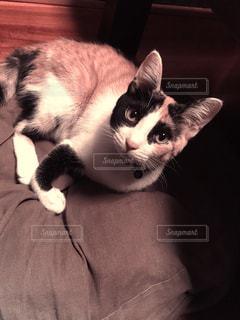 猫の写真・画像素材[1173039]