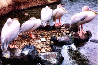 動物の写真・画像素材[1173275]