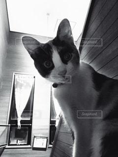 猫の写真・画像素材[1173360]