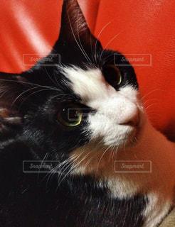 猫の写真・画像素材[1188234]