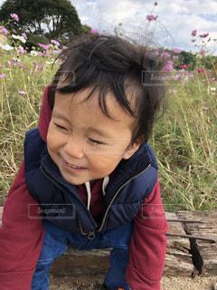 コスモスを背に破顔する男の子の写真・画像素材[1173107]