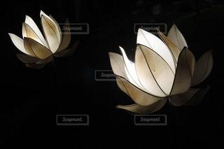 ハスの花のランタンの写真・画像素材[1172146]