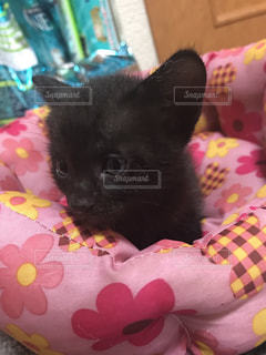 ベッドの上で横になっている猫の写真・画像素材[1171567]