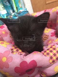ベッドの上で横になっている猫の写真・画像素材[1171568]