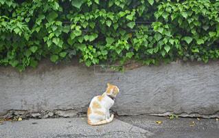 お散歩ネコちゃんの写真・画像素材[1564707]