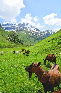 山の景色を楽しみながらの写真・画像素材[1564755]