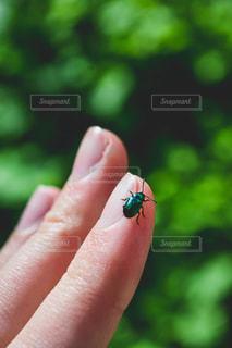 カラフルな虫がこんにちは!の写真・画像素材[1564756]