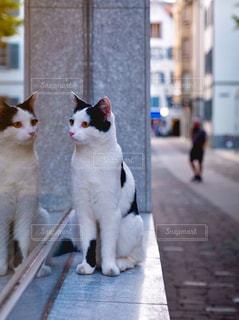 お散歩ネコちゃんの写真・画像素材[1570289]