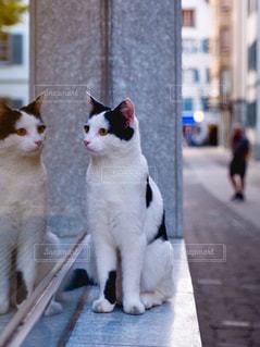 散歩中にネコちゃんに遭遇の写真・画像素材[1643997]