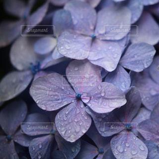 梅雨の定番の写真・画像素材[1262697]