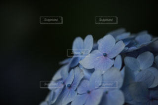 近くの花のアップの写真・画像素材[1266674]