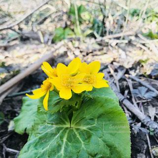 緑の葉と黄色の花の写真・画像素材[1171898]