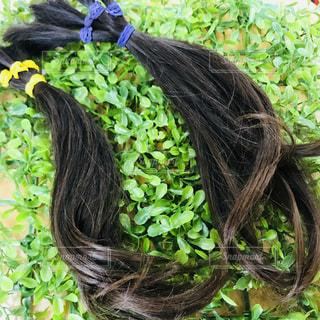 ヘアドネーション用の髪の写真・画像素材[1171974]