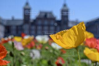 赤と黄色の花の写真・画像素材[1172122]